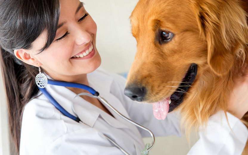 Ветеринарная клиника в городе Клин