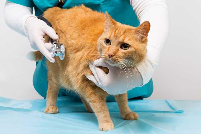 Круглосуточная ветеринарная клиника в городе Клин Московской области