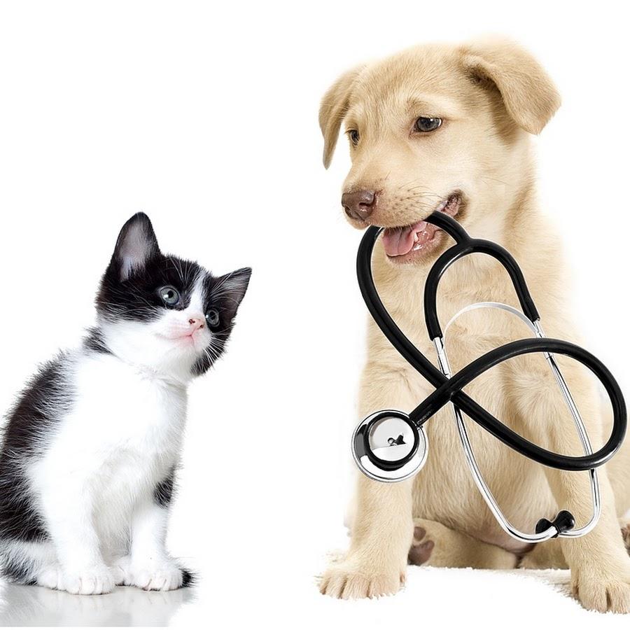 Вызов ветеринара на дом в Клину и Клинском районе Московской области