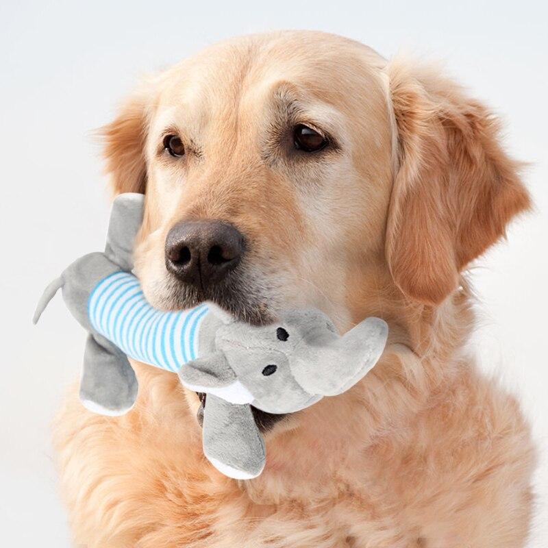 Вызов ветеринарного врача на дом в городе Клину и Клинском районе