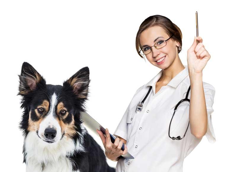 Скорая ветеринарная помощь Клину