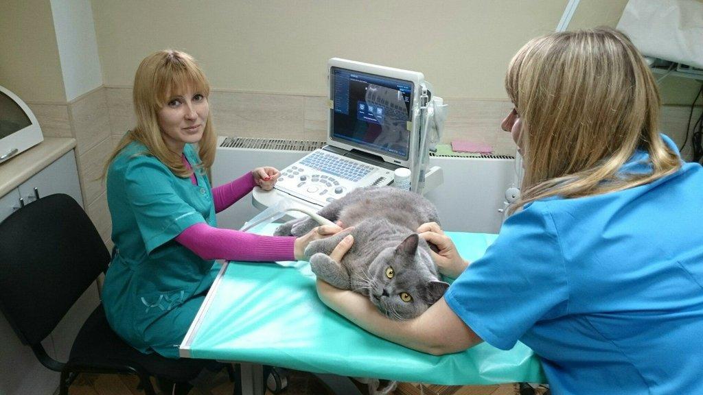 Лапраскопическая стерилизация кошки городе Клину Московской области