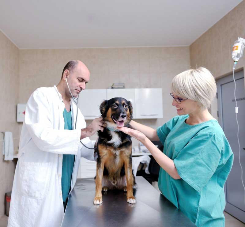 Вакцинация животных в городе Клину