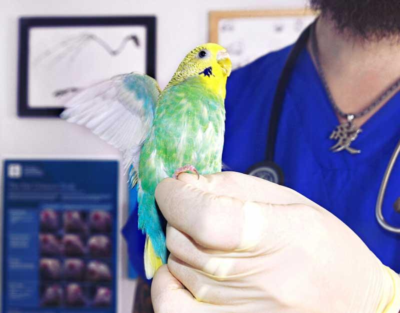 Лечение птиц в городе Клин