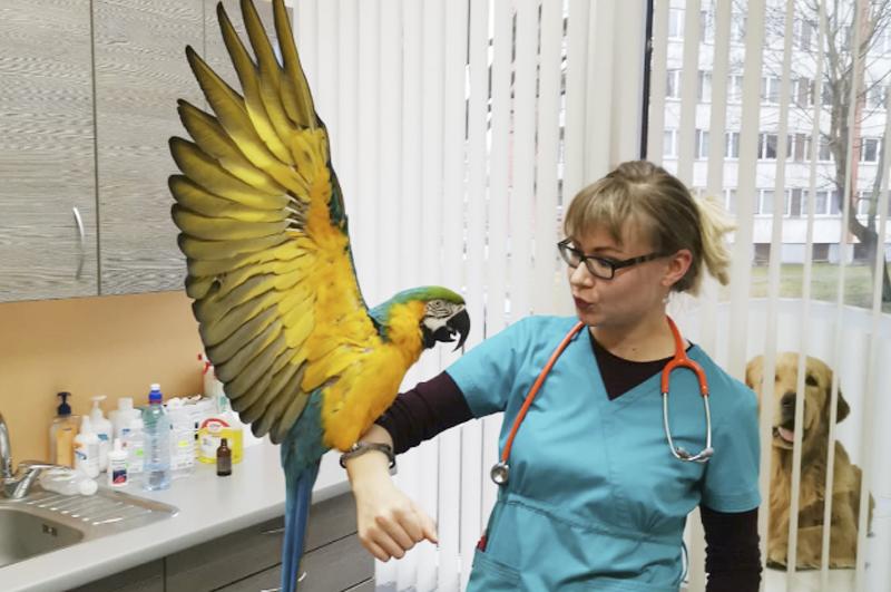Вызов на ветеринара орнитолога в городе Клин и Клинскому району Московской области
