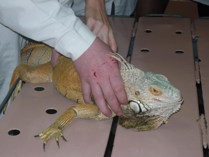 Лечение рептилий в Клину