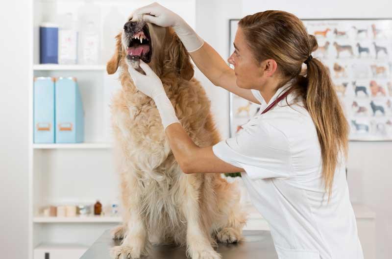 Стоматолог для собаки, кошки в Клину