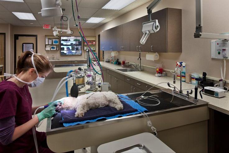 Удаление зубного камня у собак, кошек в городе Клину Московской области