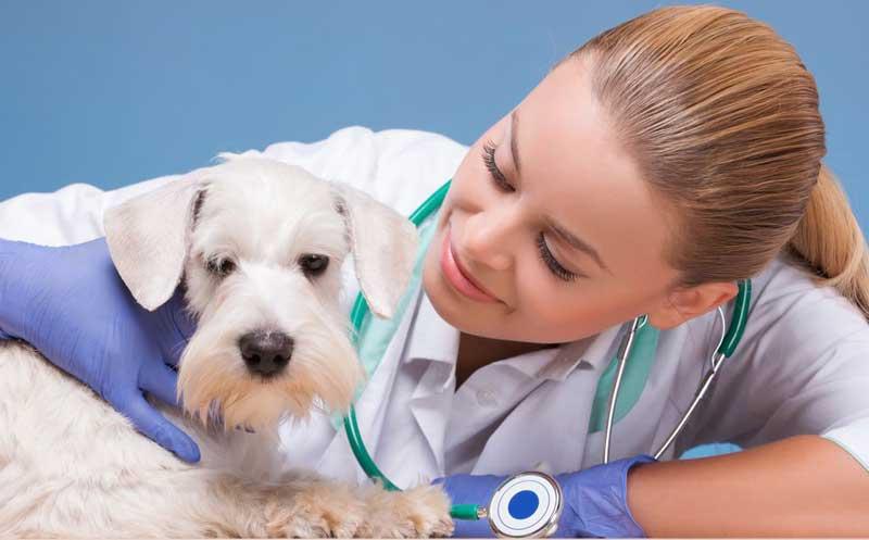 Вызов на дом ветеринара стоматолога для животных по городу Клину и Клинскому районе Московской область