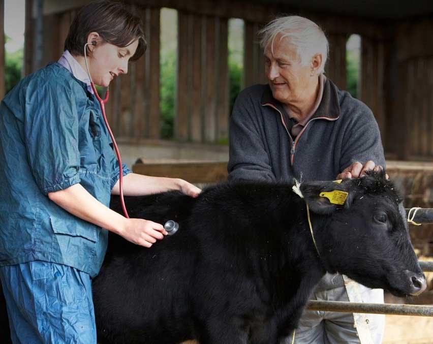 лечении коз, коров, лошадей, баранов и других видов сельскохозяйственных животных в городе Клин и Клинском районе